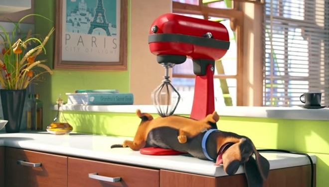 Thú cưng sẽ làm gì khi bạn vắng nhà?