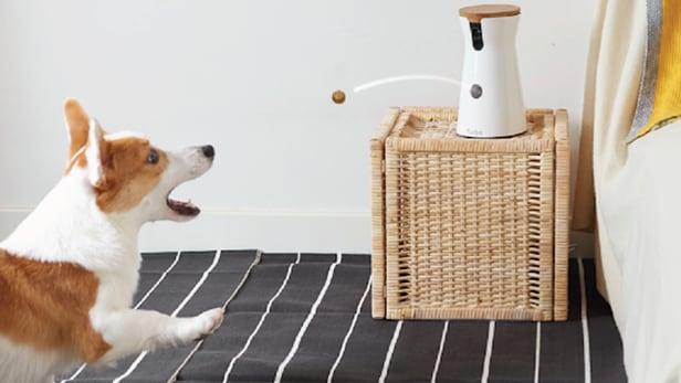 Furbo: Chó đã sủa, liệu chúng có đang đói?