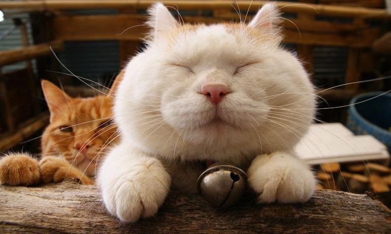 15 câu chuyện chỉ có ai nuôi mèo mới hiểu