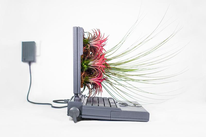 Ngắm ý tưởng trồng cây cảnh trong máy tính Mac cũ siêu chất, siêu lạ