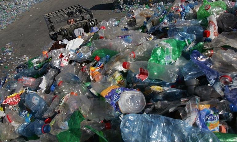 """Bãi rác thải khổng lồ có thể được """"tiêu hóa"""" chỉ bởi một loài sâu"""