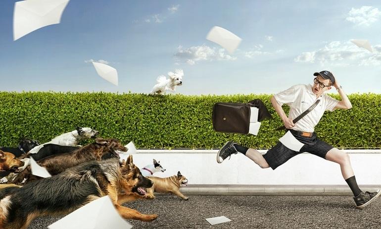Chó đuổi mà chạy là… hạ sách