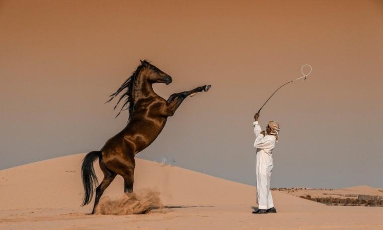 Hé lộ người thắng cuộc giải thưởng quốc gia tại giải Sony World Photography Awards năm 2020